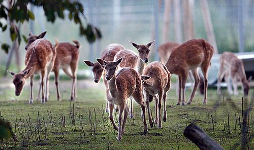 Tierpark Schwarzach lockt zu Pfingsten
