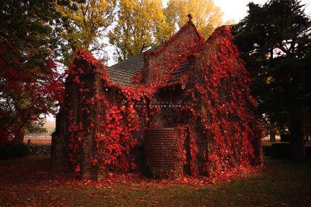Ivy House, Australia