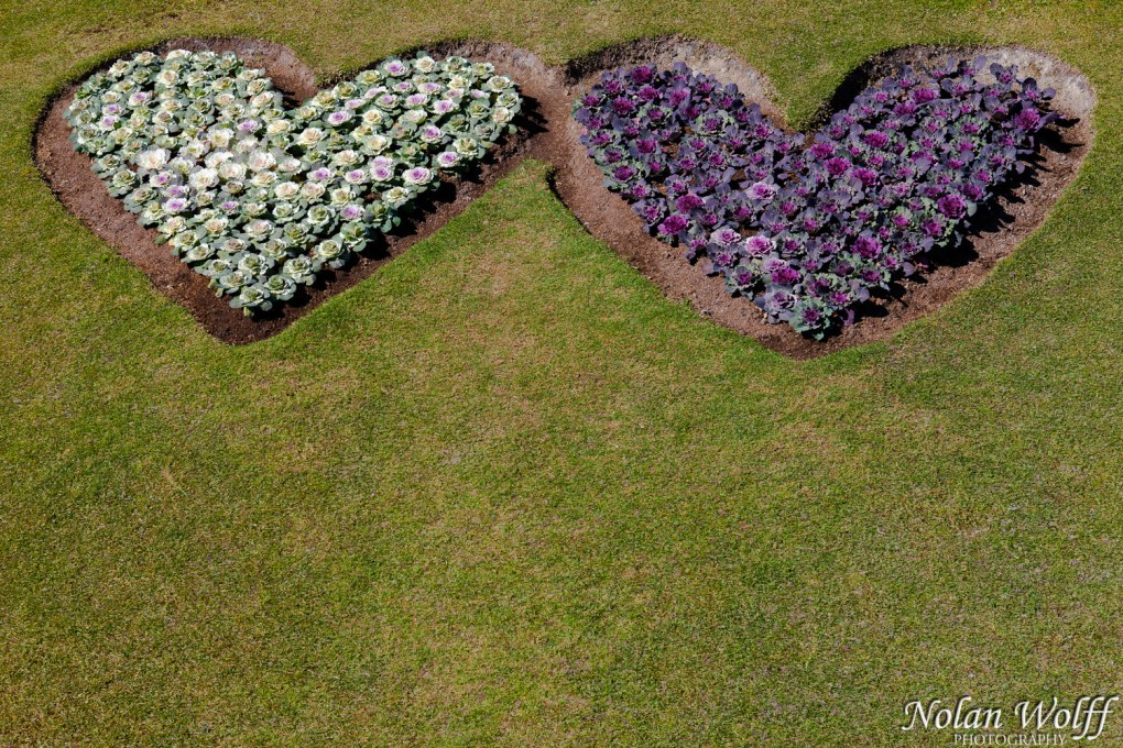 Two hearts (454F18738)