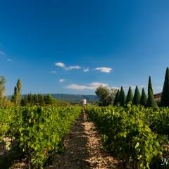 Vineyard (454F23163)