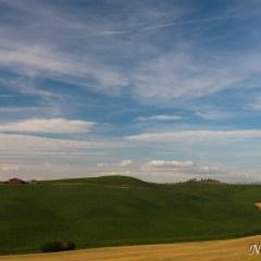 Farmhouse with tree-lined hills, Tuscany (454F28109)