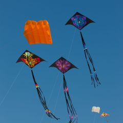 Kites at Bondi Beach (454F38937)