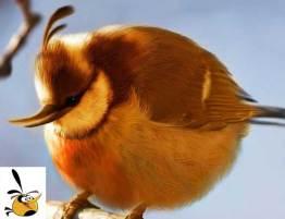angry-birds-irl-concept-orange-bird