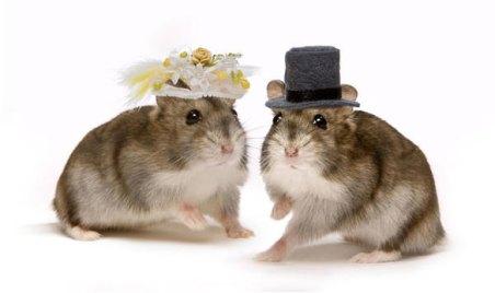 animales-casados-02