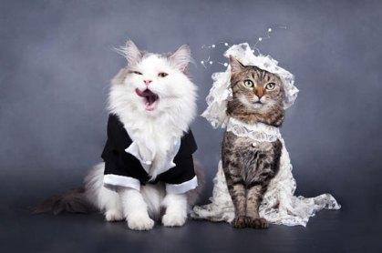 animales-casados-03