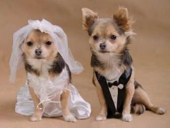 animales-casados-07