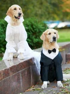 animales-casados-10