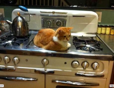 gatos-dia-de-accion-de-gracias-2013-03