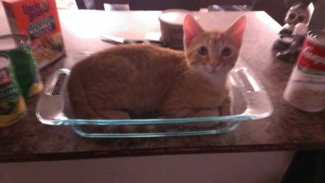 gatos-dia-de-accion-de-gracias-2013-04