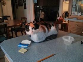 gatos-dia-de-accion-de-gracias-2013-06