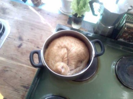 gatos-dia-de-accion-de-gracias-2013-07
