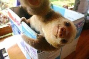 animal-selfie-04