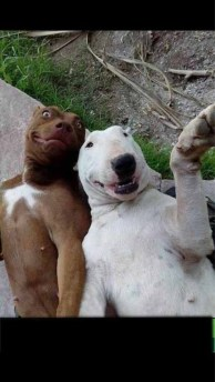 animal-selfie-07
