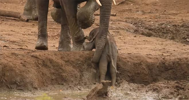elefante-bebe-en-hueco