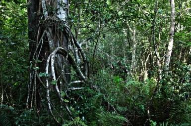 tree-hdr