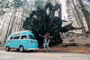 sequoia national park nomadarte