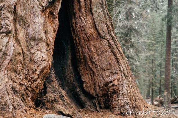 parque nacional sequoia, national park sequoia-303