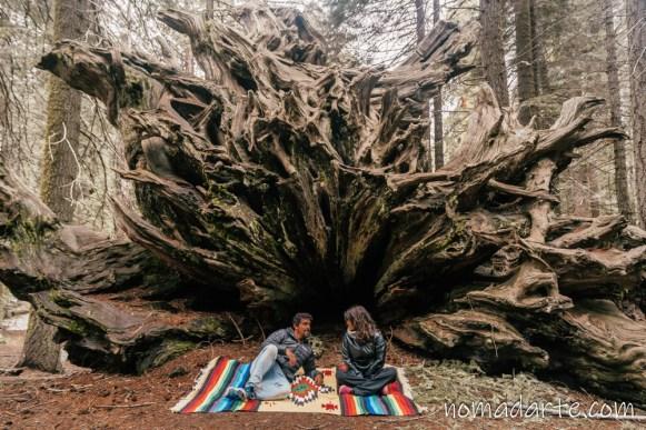 parque nacional sequoia, national park sequoia-363