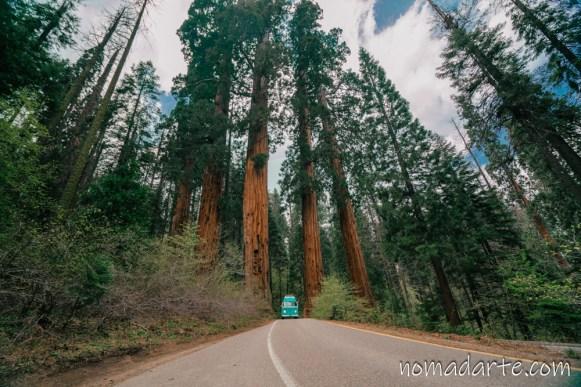 parque nacional sequoia, national park sequoia-56