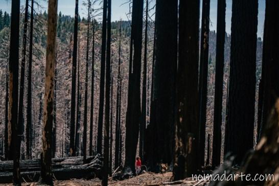 Parque Nacional Yosemite nomadarte vanlife-158