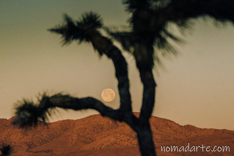 luna desierto california