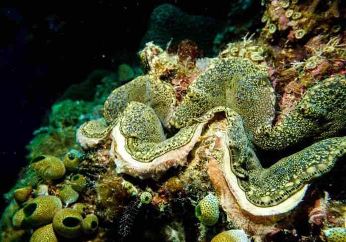 Scuba Diving In Maumere Indonesia Nomadasaurus