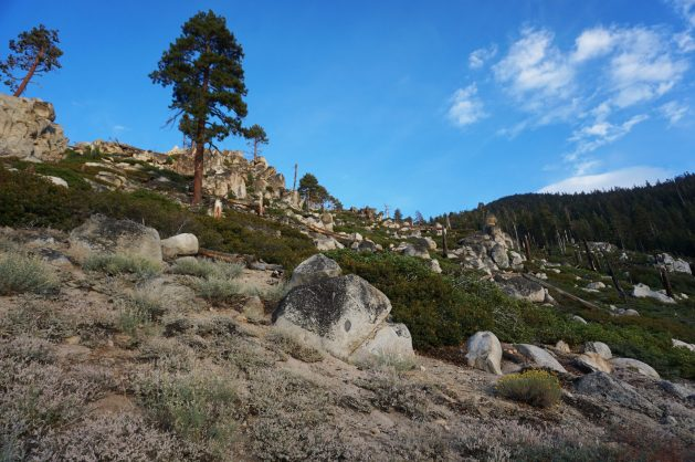 Wildfire scar at Van Sickle Bi-State Park at Lake Tahoe