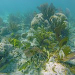 Coral reef in Biscayne National Park