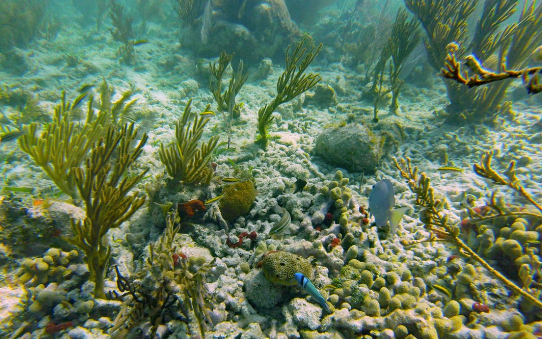 Biscayne National Park Snorkeling Tour and Tips