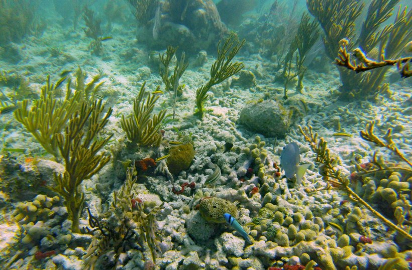 Colorful fish and coral in Biscayne National Park Florida
