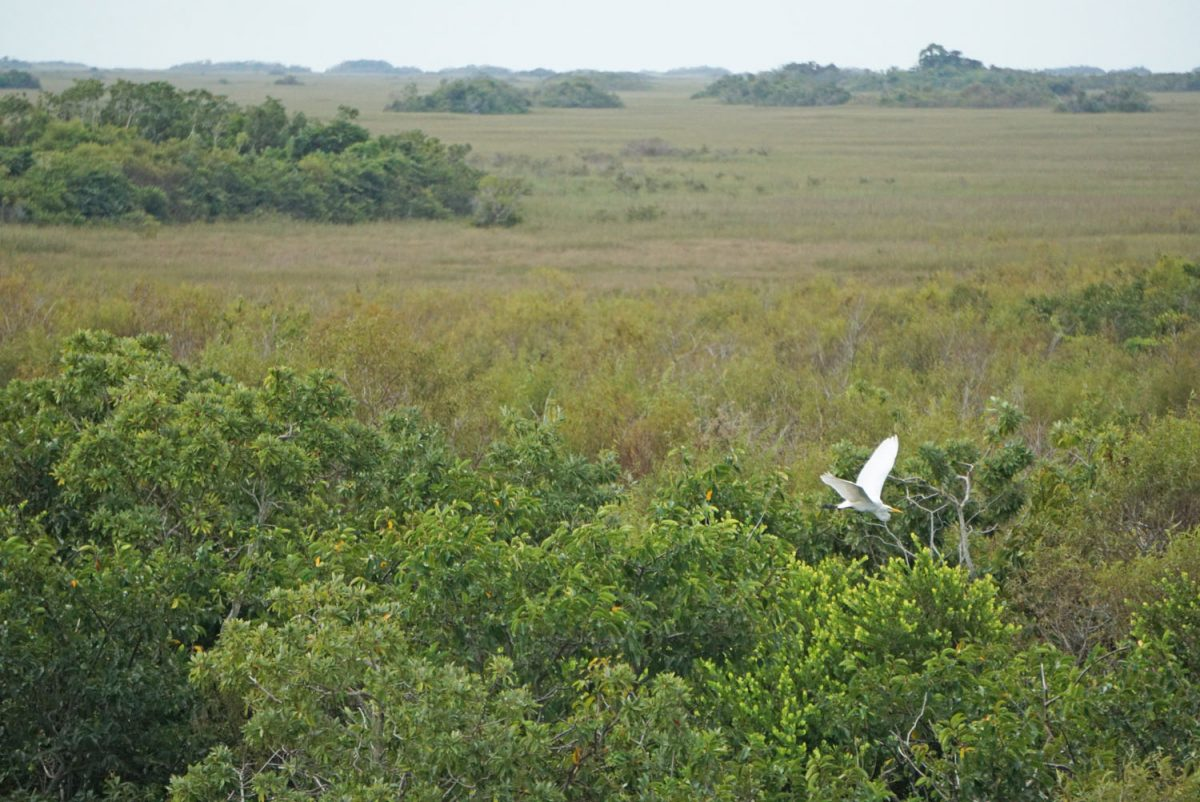 Go Wildlife Spotting on an Everglades Tram Tour • Nomad by Trade