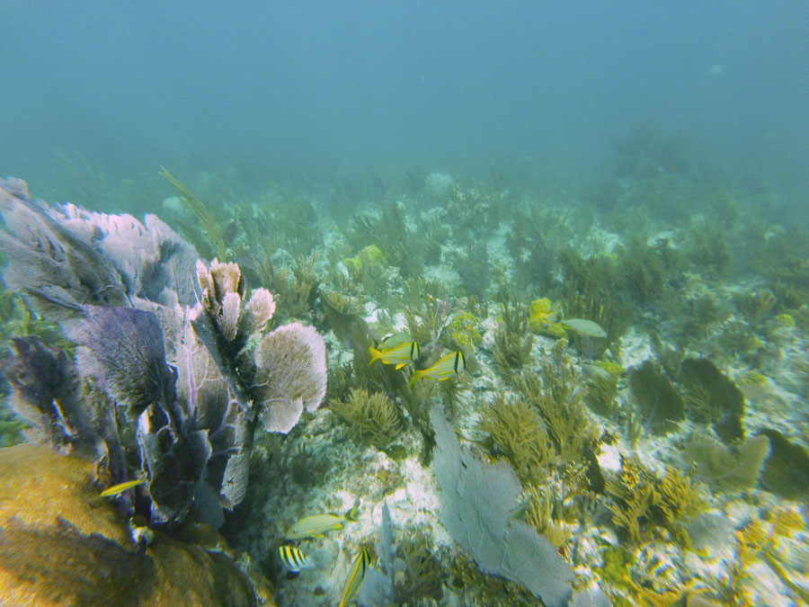 Colorful coral near Key Biscayne