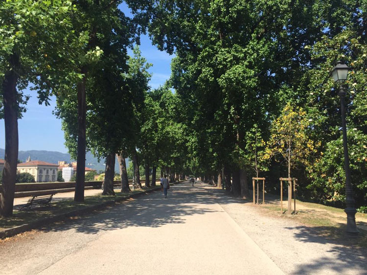 Bike path in Lucca, Italy