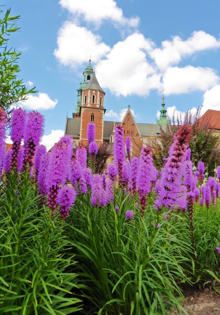 Flowers in the Wawel Castle courtyard