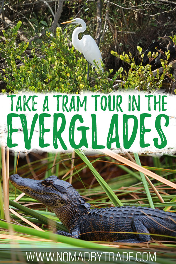 "Photos of wildlife with text overlay reading ""take a tram tour in the Everglades"""