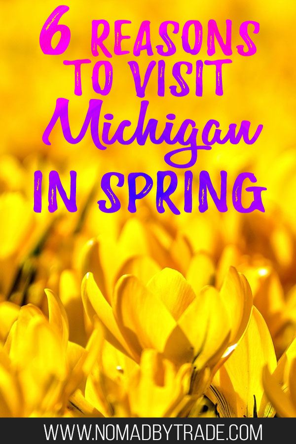 """Yellow flowers with text overlay reading """"6 reasons to visit Michigan in spring"""""""