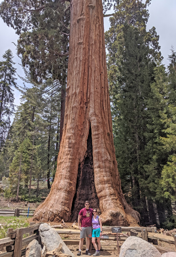 Couple standing in front of the Sentinel Tree in Sequoia National Park