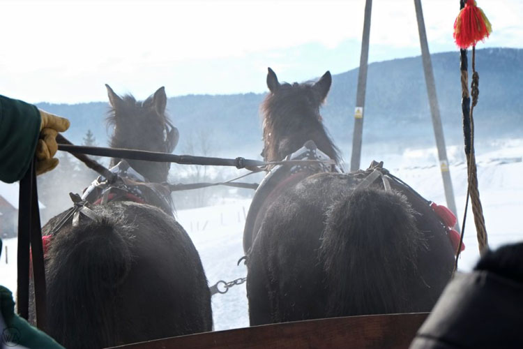 Team of horses pulling a sleigh in Poland
