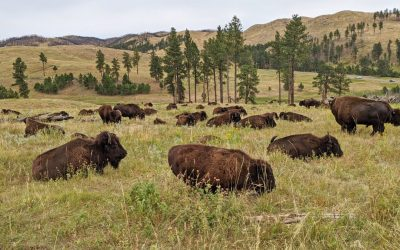 7 Great Things to Do in Custer State Park