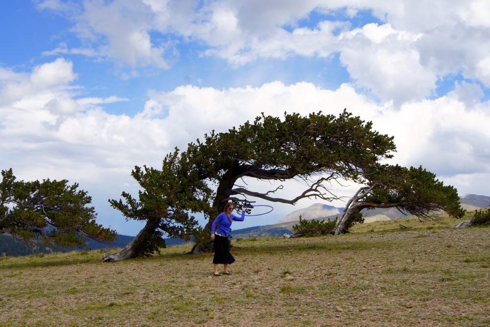 Hooping Among the Ancient Bristlecone Pine