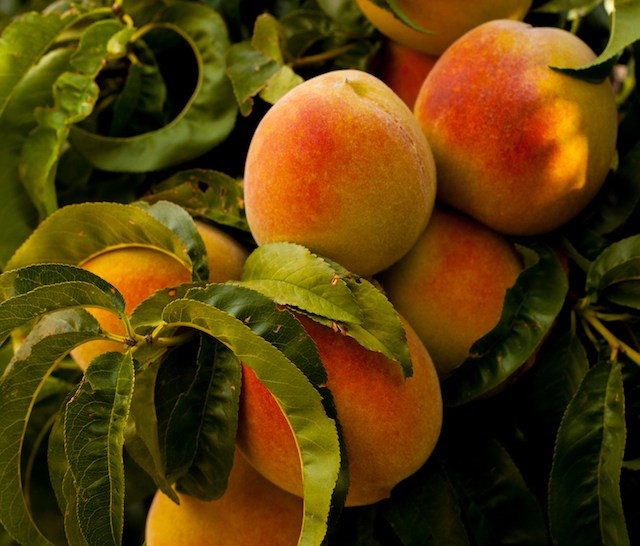 Palisade Peaches