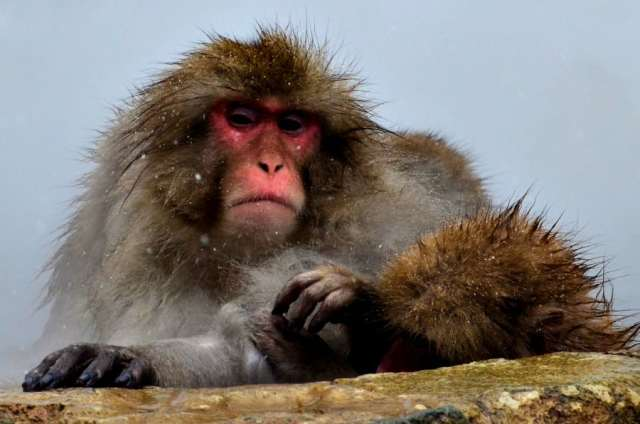 snow-monkey-park-6