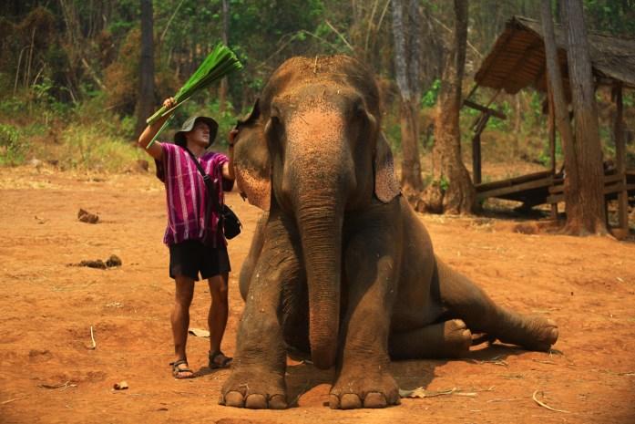 thailand, chiang mai, patara elephant farm, elephant, cleaning