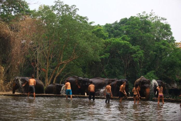 thailand, chiang mai, patara elephant farm, elephant, riding, washing
