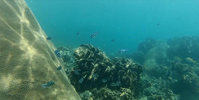 thailand, koh samui, snorkeling, diving, fish
