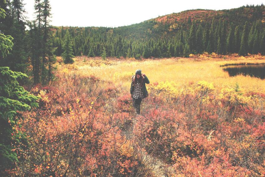 Denali National Park: Road trip por Alaska