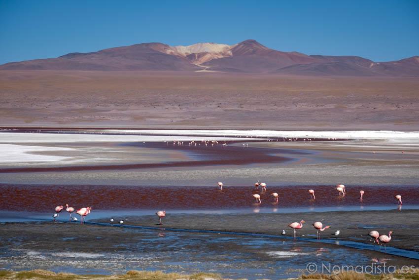 Laguna Colorada Nomadista