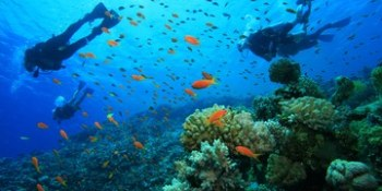 Scuba diving - Andaman Nicobarn , Cinque Island, Rutland Island, Snake Island (AROUND PORT BLAIR) and HAVELOCK ISLAND.Other Interesting sports are - Island Camping, Snorkeling, Trekking, india, Andaman nicobar Island