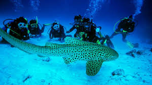 Important things to do in Andaman Nicobar Islands -   scuba diving, andaman nicobar islands