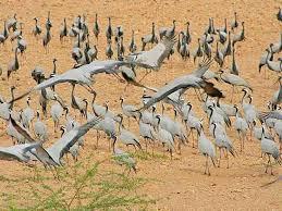 Tourist places to visit near Jaisalmer - Desert National Park